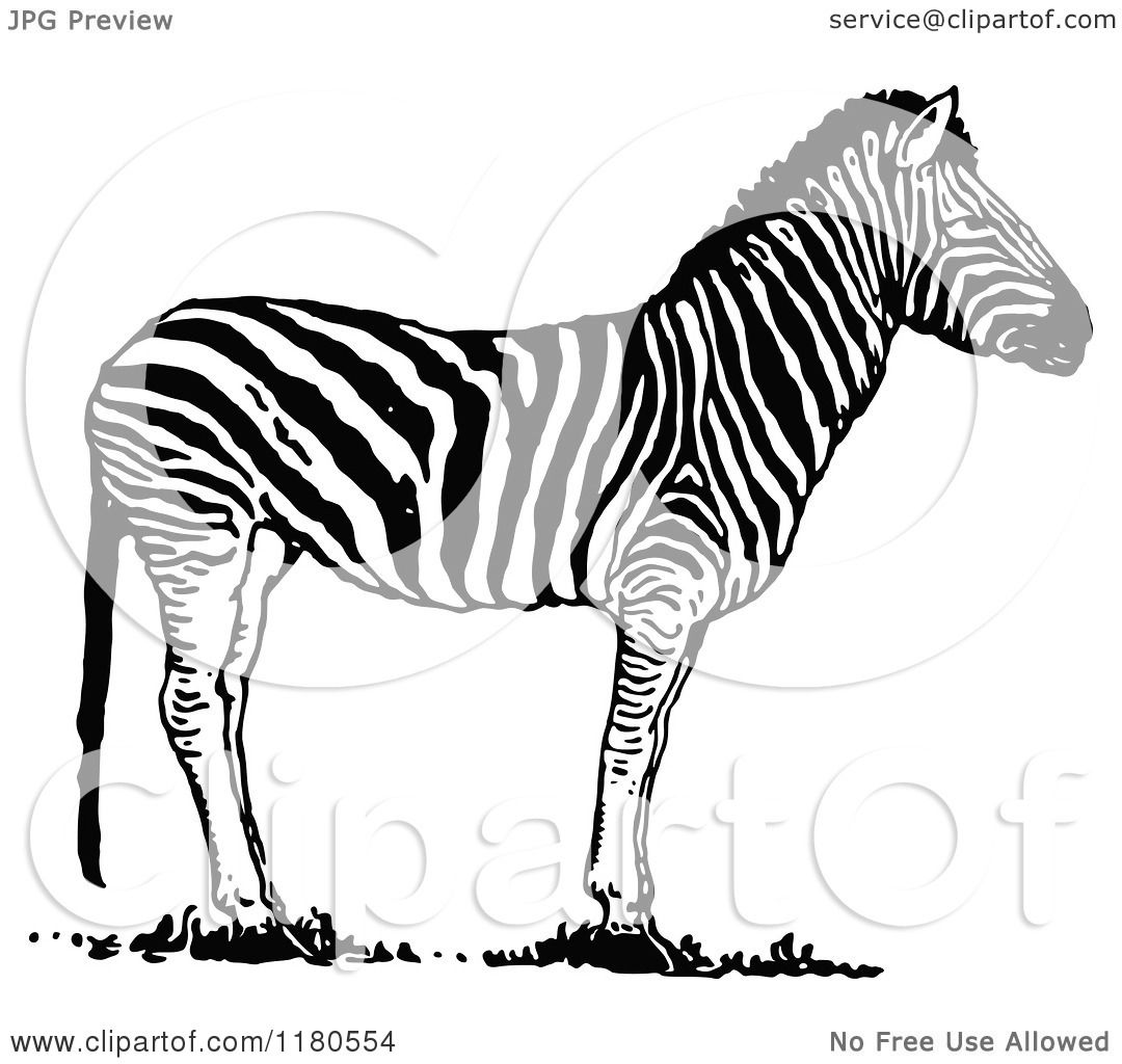 Clipart of a Retro Vintage Black and White Zebra - Royalty Free ...