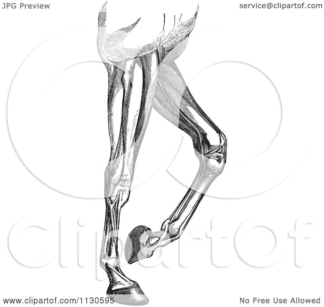 Diagram Of Horses Legs - Circuit Connection Diagram •