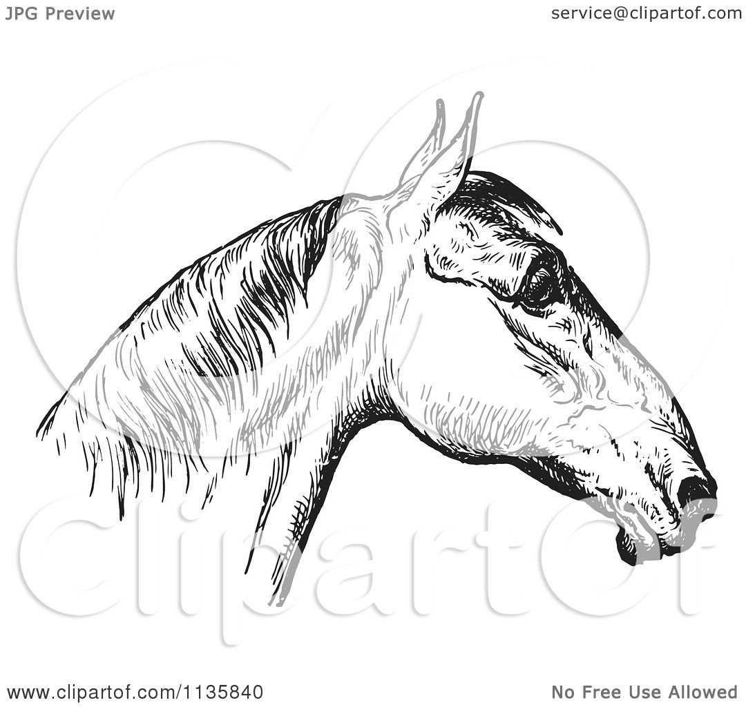 Clipart Of A Retro Vintage Engraved Horse Anatomy Of A Bad Head In