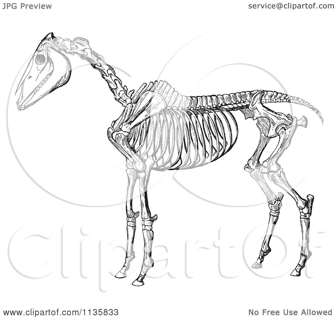 Clipart Of A Retro Vintage Horse Anatomy Of The Skeleton In Black ...