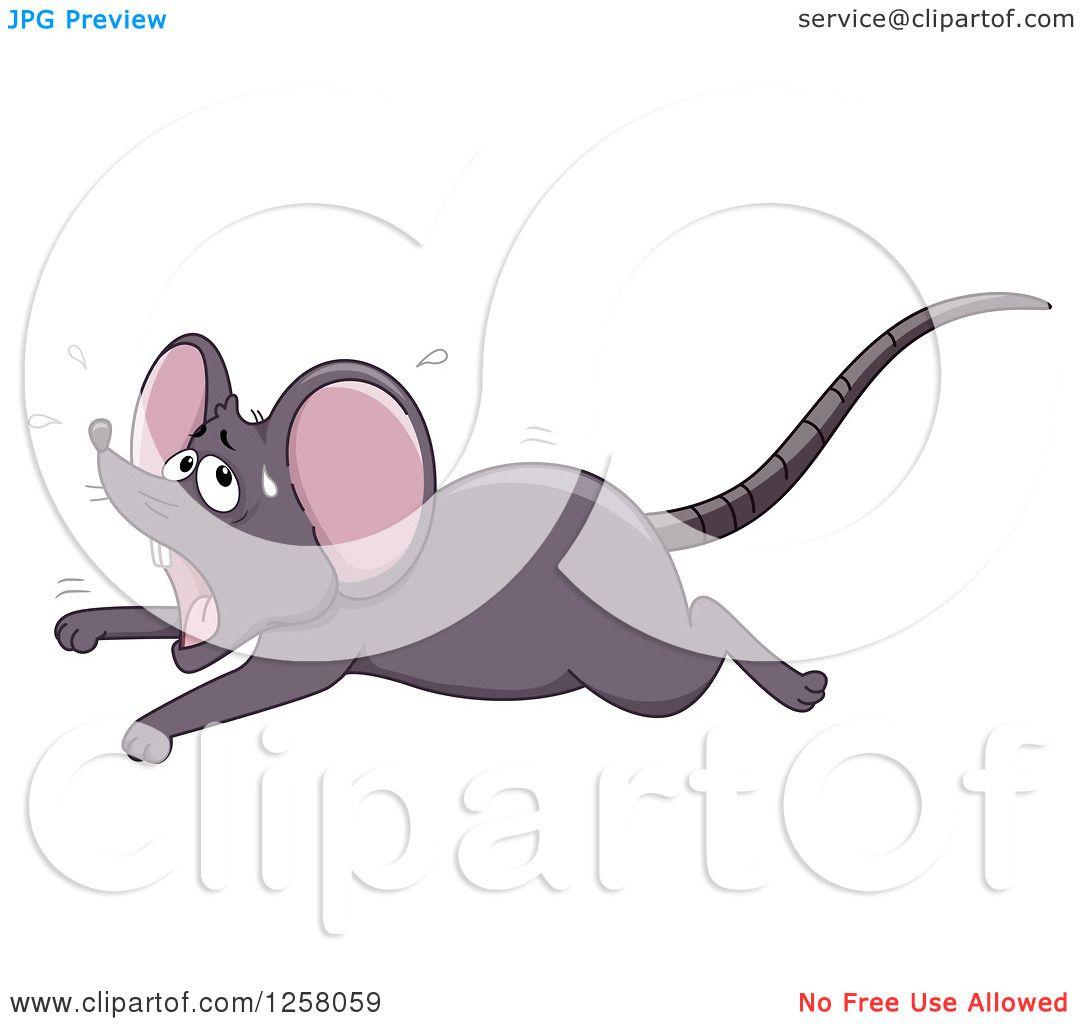 River Rat Illustrations, Royalty-Free Vector Graphics