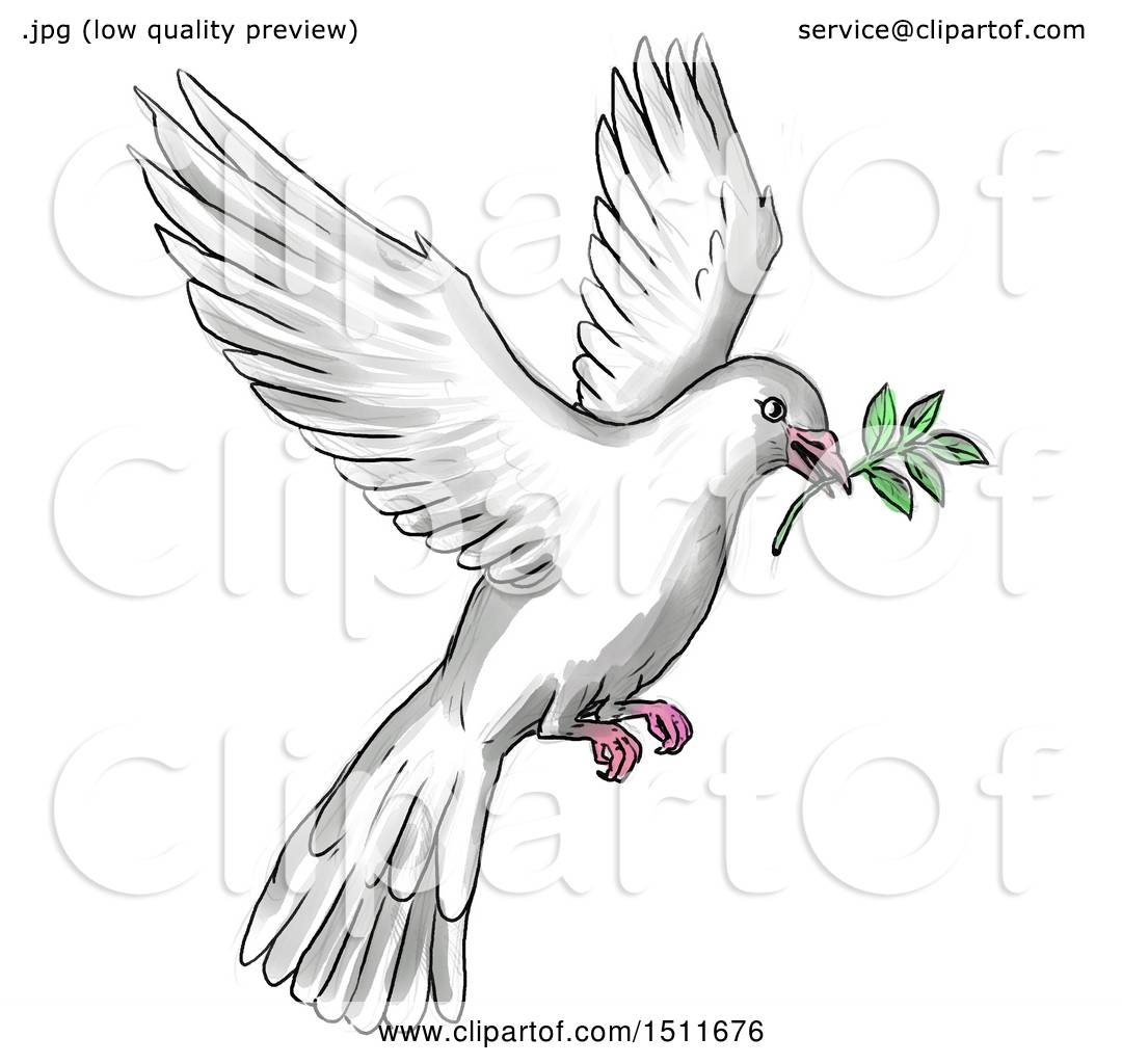 clipart of a sketched and watercolor peace dove flying