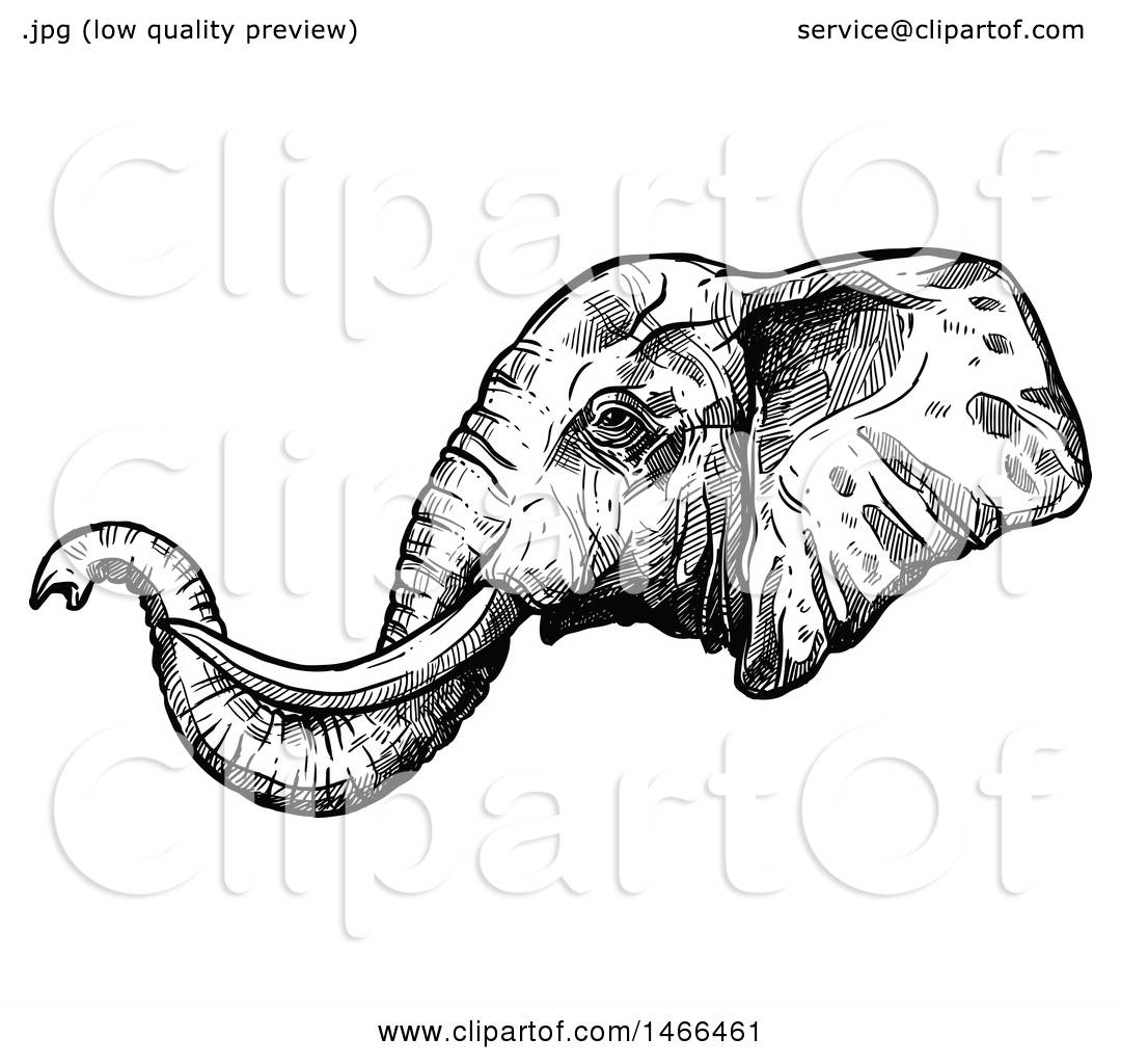 Clipart of a Sketched Black and White Elephant Head in ...