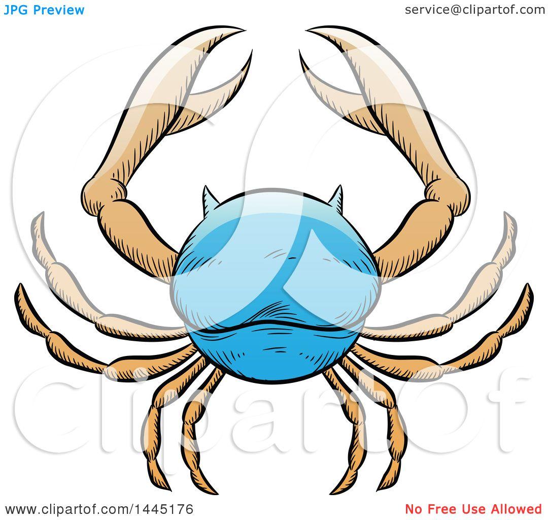 Hermosa King Crab Anatomy Componente Imgenes De Anatoma Humana