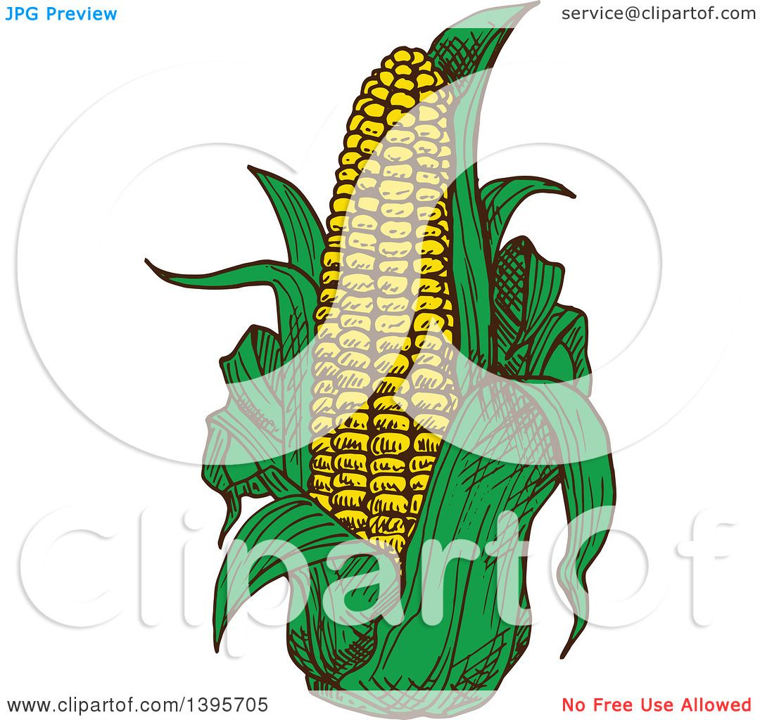 clipart of a sketched ear of corn royalty free vector. Black Bedroom Furniture Sets. Home Design Ideas