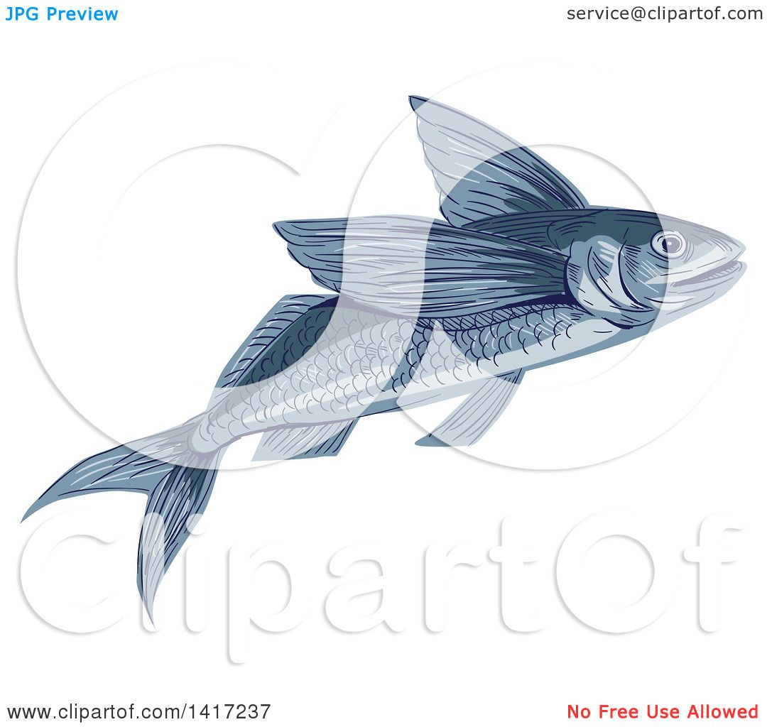 Clipart of a Sketched Flying Fish or Exocoetidae - Royalty Free Vector ...