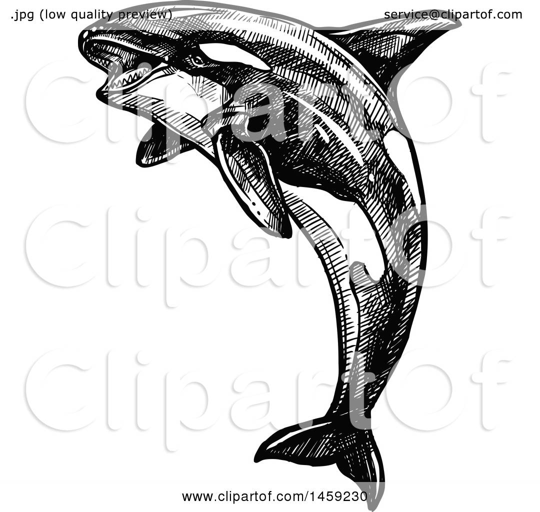 clipart of a sketched orca killer whale in black and white