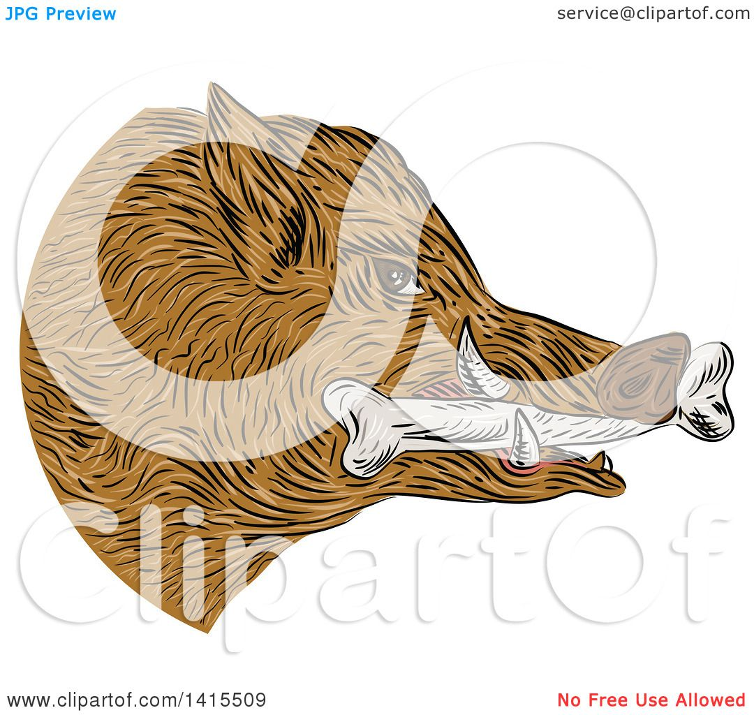 Clipart of a Sketched Wild Boar Pig Head with a Bone in Its Mouth ...