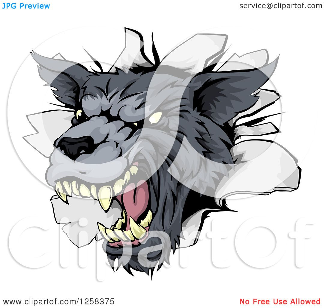 Clipart Of A Snarling Gray Wolf Mascot Head Breaking Through A Wall Royalty  Free Vector Illustration How I Draw
