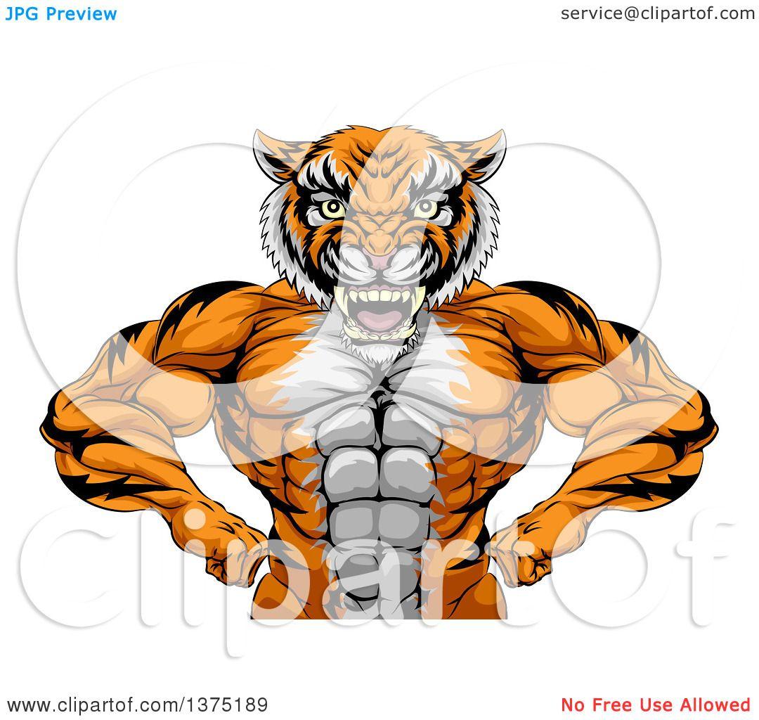 Clipart of a Tough Bodybuilder Tiger Man Flexing His Big Muscles ...