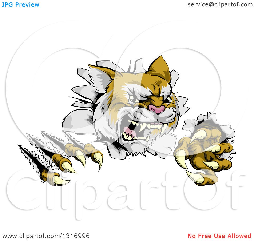 Clipart of a Vicious Wild Cat Slashing Through a Wall - Royalty ...