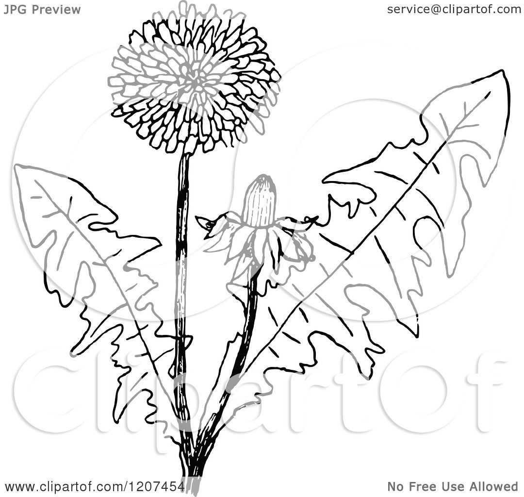 This is a photo of Inventive Dandelion Coloring Page