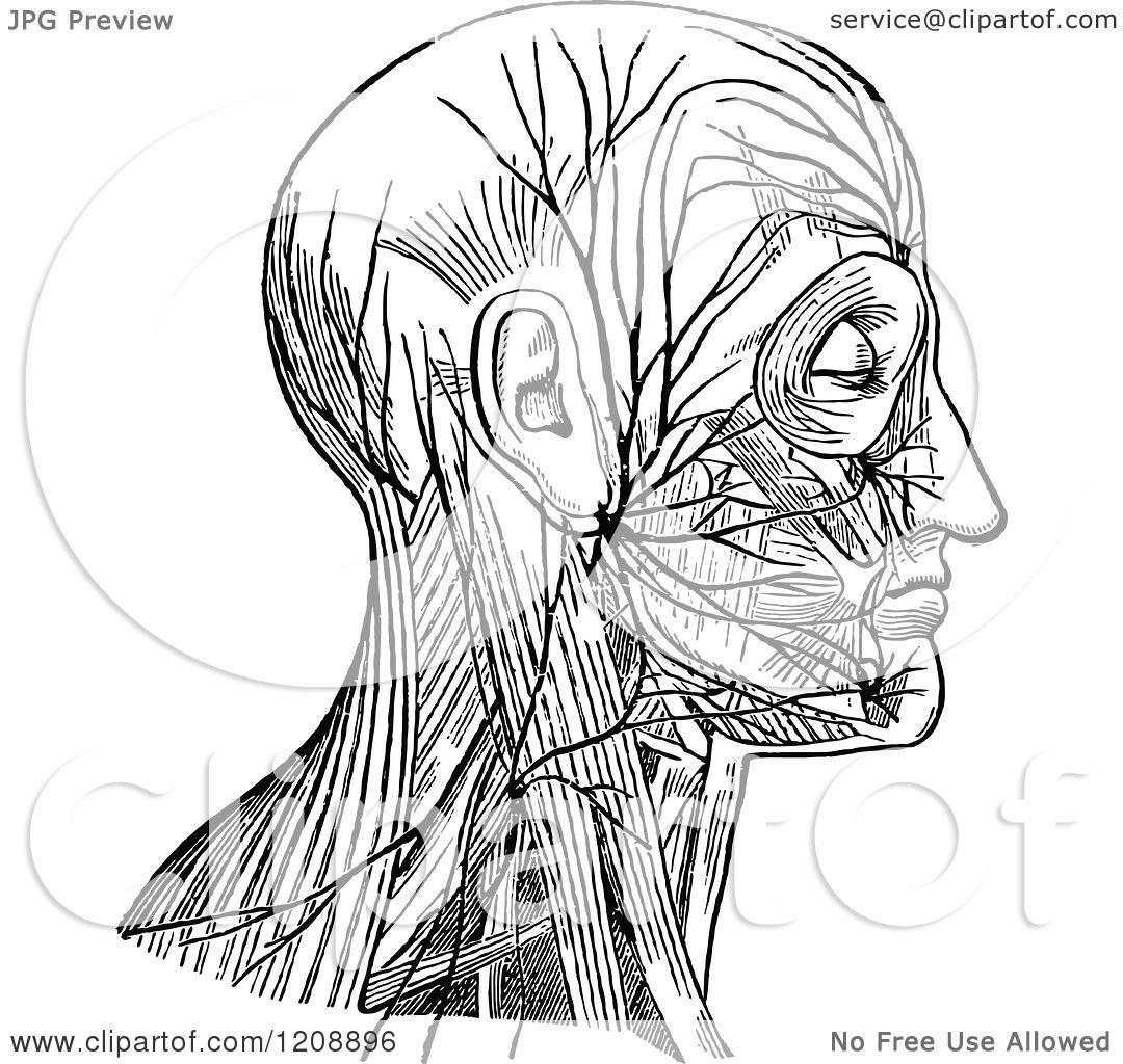 Nerves Diagram Diagram of Facial Nerve