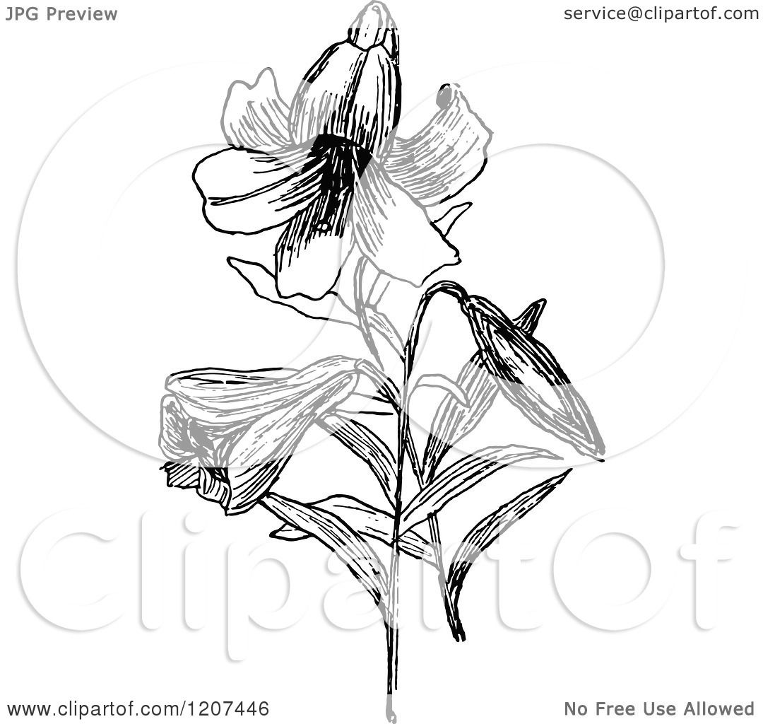 Easter Lily Clipart Black And White - Floral delivery