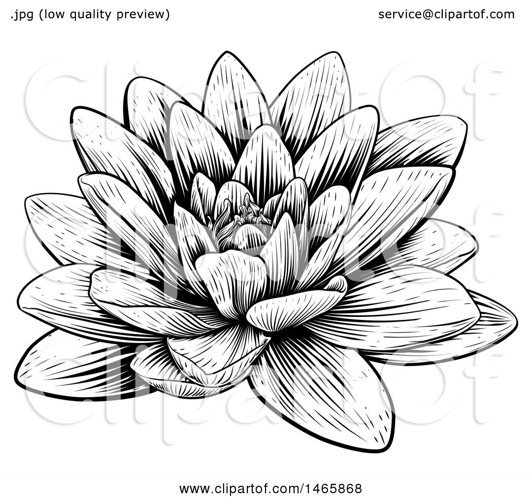 Clipart of a Vintage Black and White Engraved or Woodcut ...