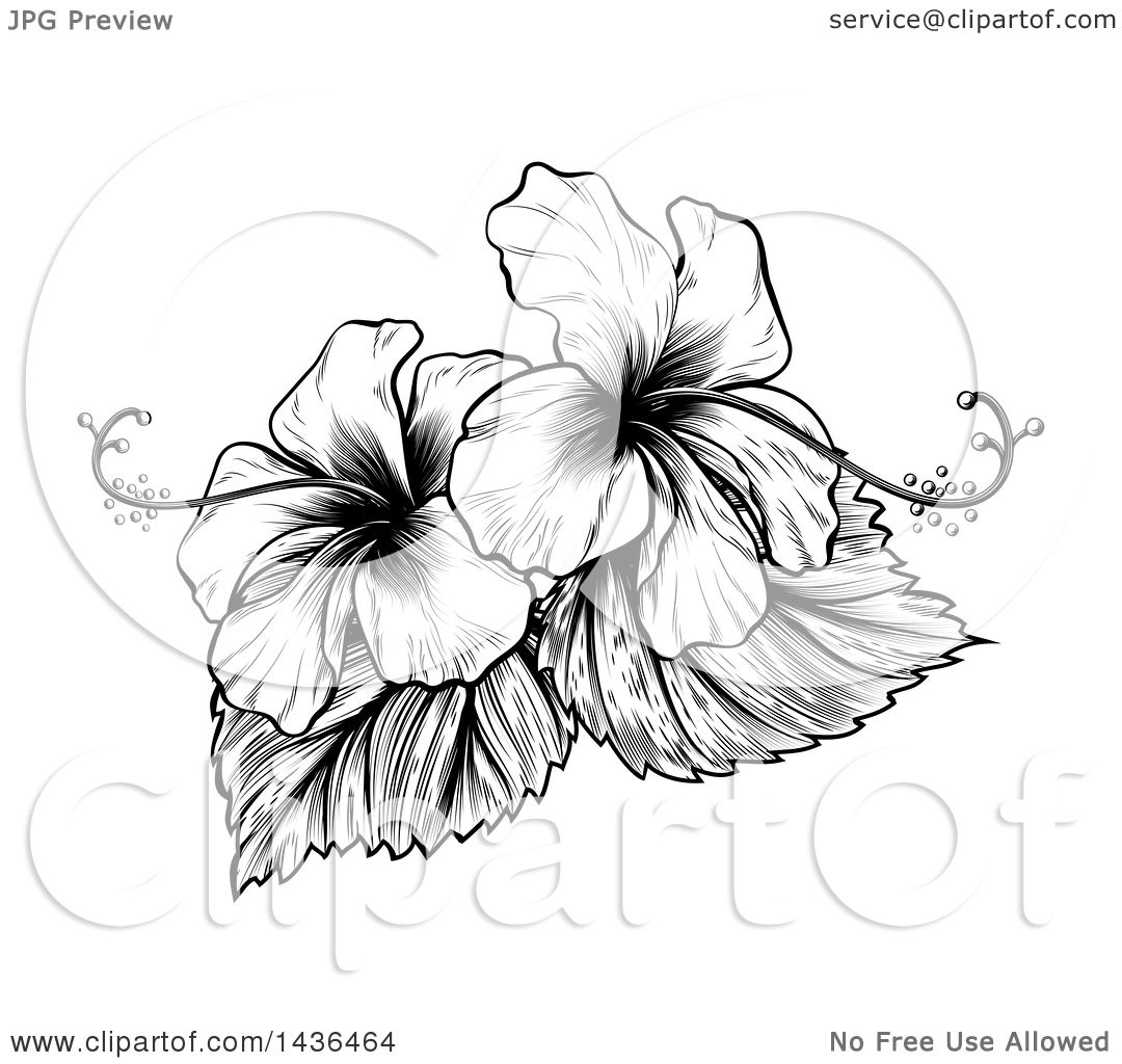 Clipart of a vintage black and white engraved or woodcut hibiscus clipart of a vintage black and white engraved or woodcut hibiscus flower design royalty free vector illustration by atstockillustration izmirmasajfo