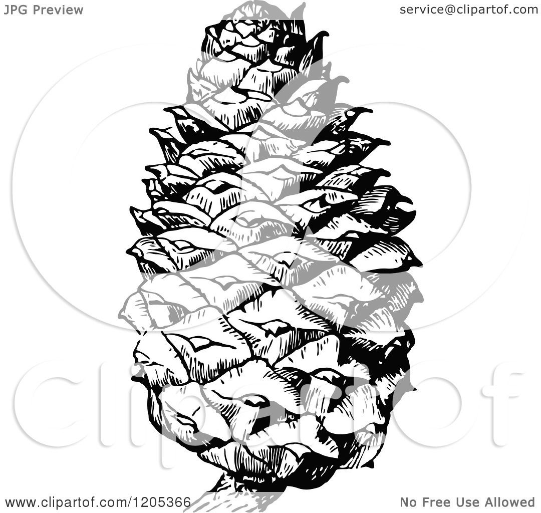 Clipart Of A Vintage Black And White Pine Cone Royalty Free Vector