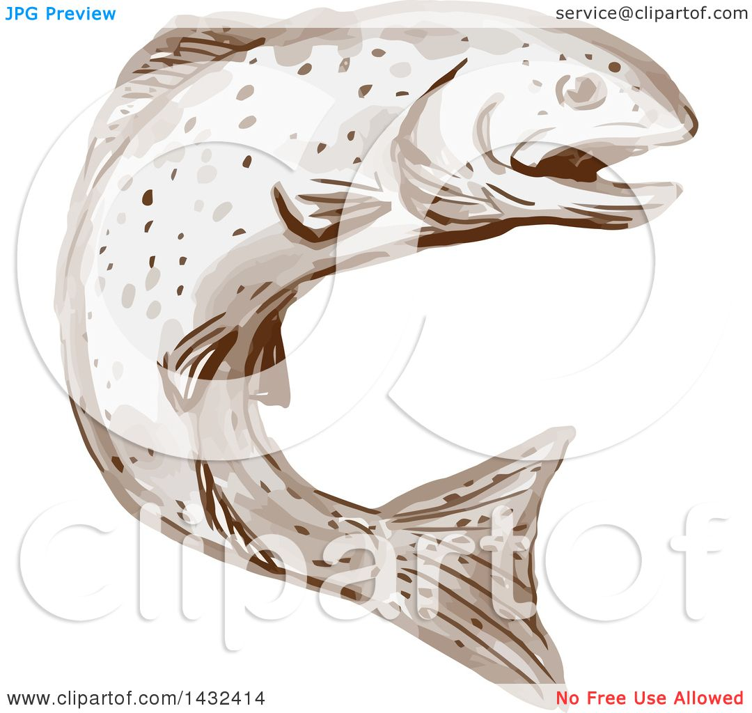 clipart of a watercolor rainbow trout fish jumping royalty free