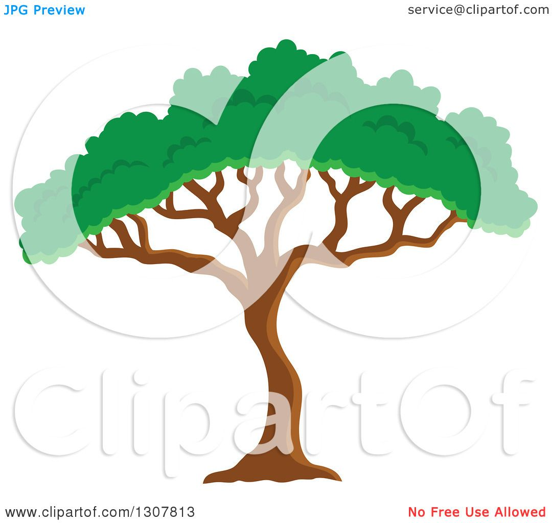 Clipart of an African Acacia or Umbrella Tree - Royalty Free Vector ...