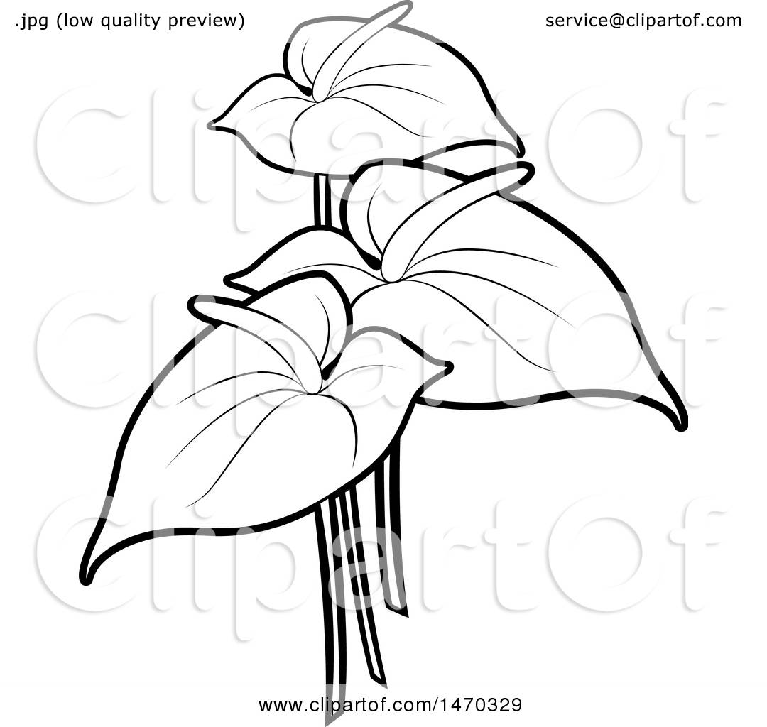 Clipart Of Black And White Anthurium Flowers Royalty Free Vector