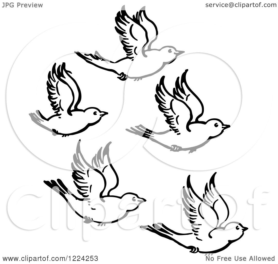 Clipart of Black and White Five Flying Birds - Royalty ...