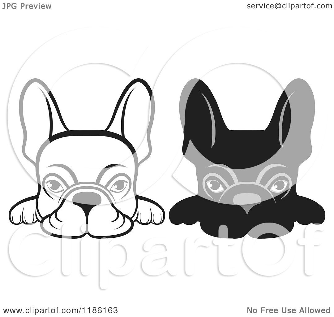 Clipart Of Black And White Frenchie Dogs Looking Over A