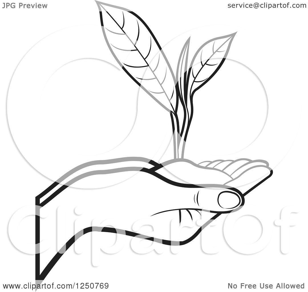 Clip Art Tea Leaf Images Download Cv Letter And Format