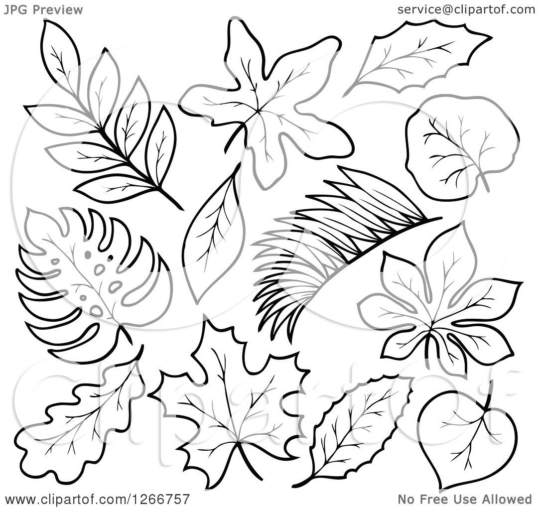 Clipart of Black and White Leaves - Royalty Free Vector ...
