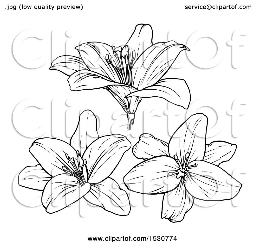 Clipart Of Black And White Lily Flowers Royalty Free Vector