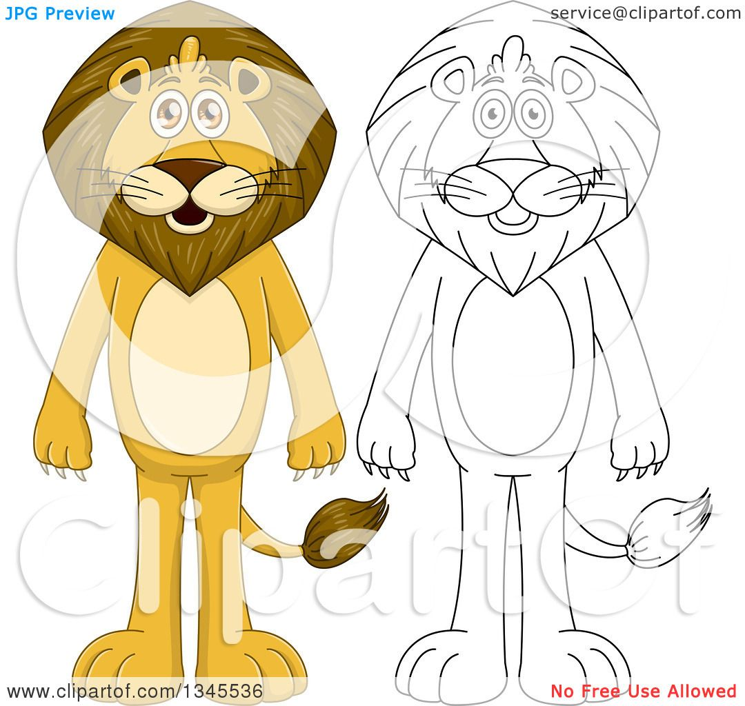 Clipart Of Cartoon Colored And Black And White Outline Standing Male Lions Royalty Free Vector Illustration By Liron Peer 1345536 The four mighty majingilane male lions continue to make their mark on the sabi sand's lion their presence is undeniable as they have had impacts on every lion to call the sabi sands home. royalty free vector illustration by