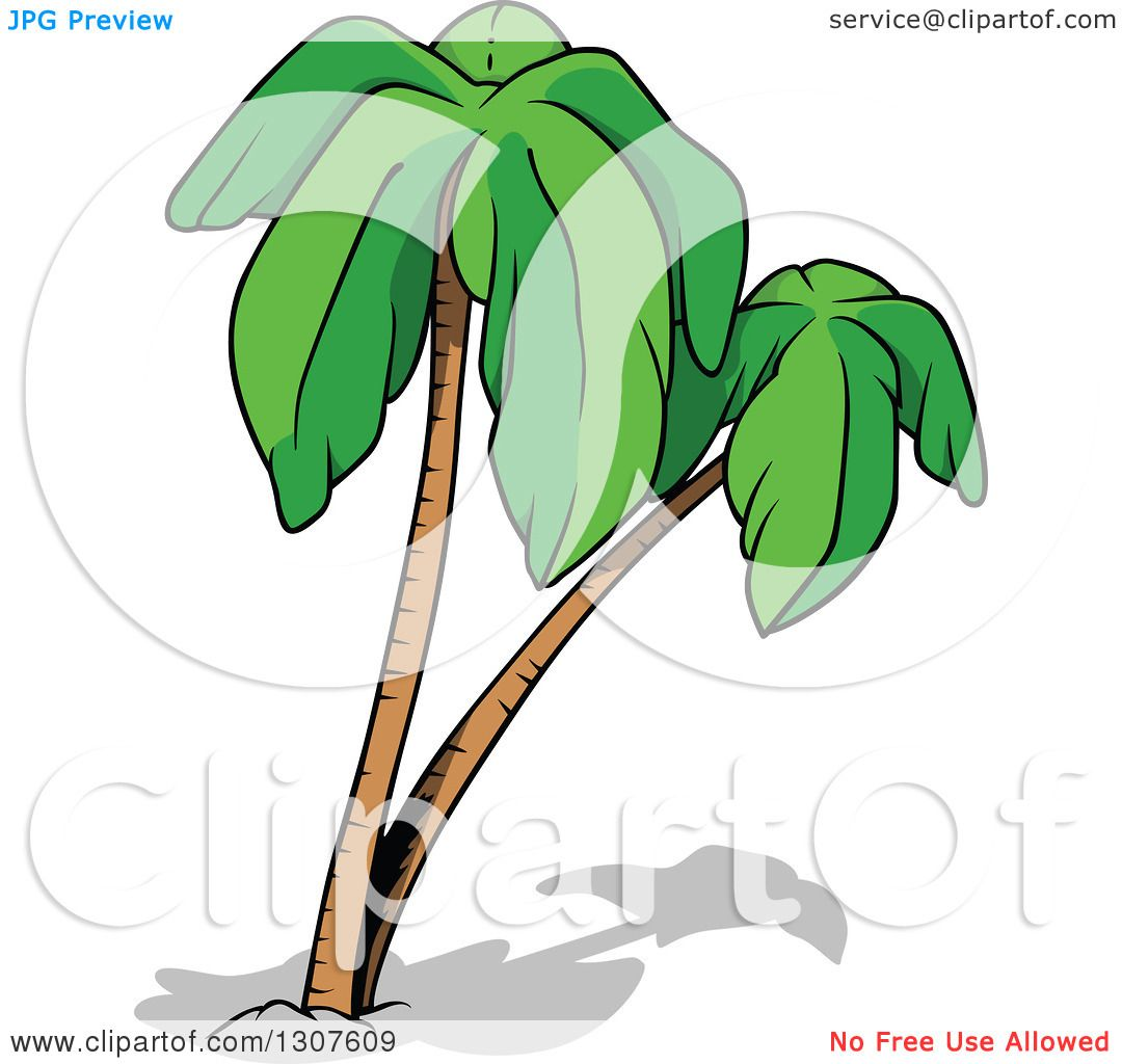 Clipart of cartoon palm trees and shadows royalty free vector