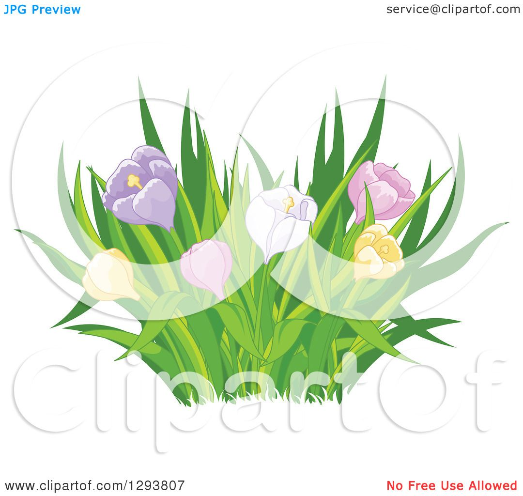clipart of grasses and colorful spring tulip or crocus flowers