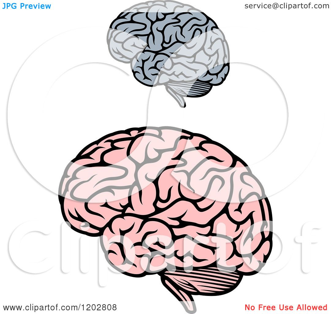 Clipart of Gray and Pink Human Brains 2 - Royalty Free ...