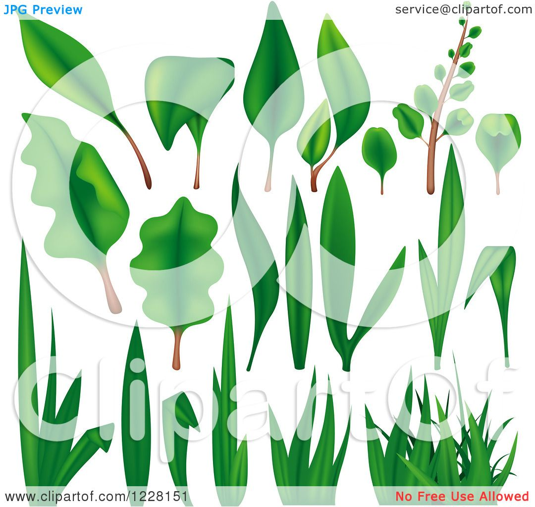 Clipart of Green Grass Leaves and Plants - Royalty Free ...