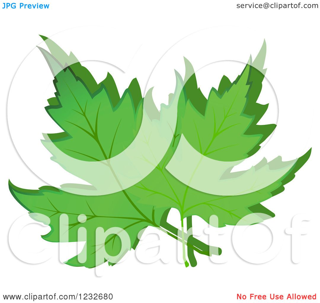 Clipart of Green Maple Leaves and Shadow - Royalty Free Vector ...