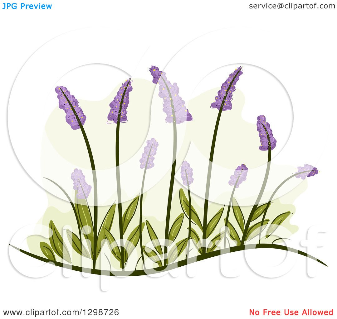 Clipart of Lavender Flowers and