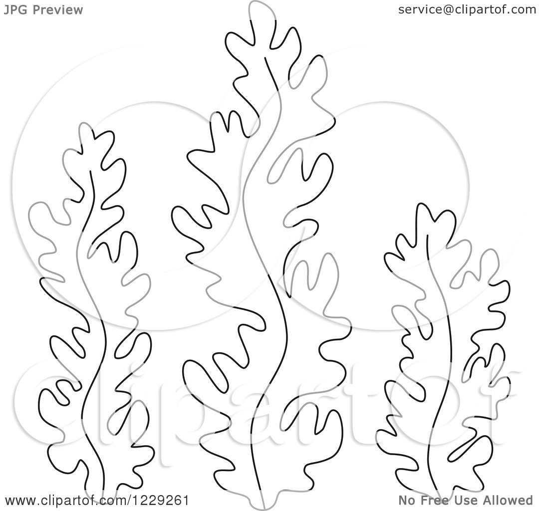 Clipart of Outlined Seaweed - Royalty Free Vector Illustration by Alex ...
