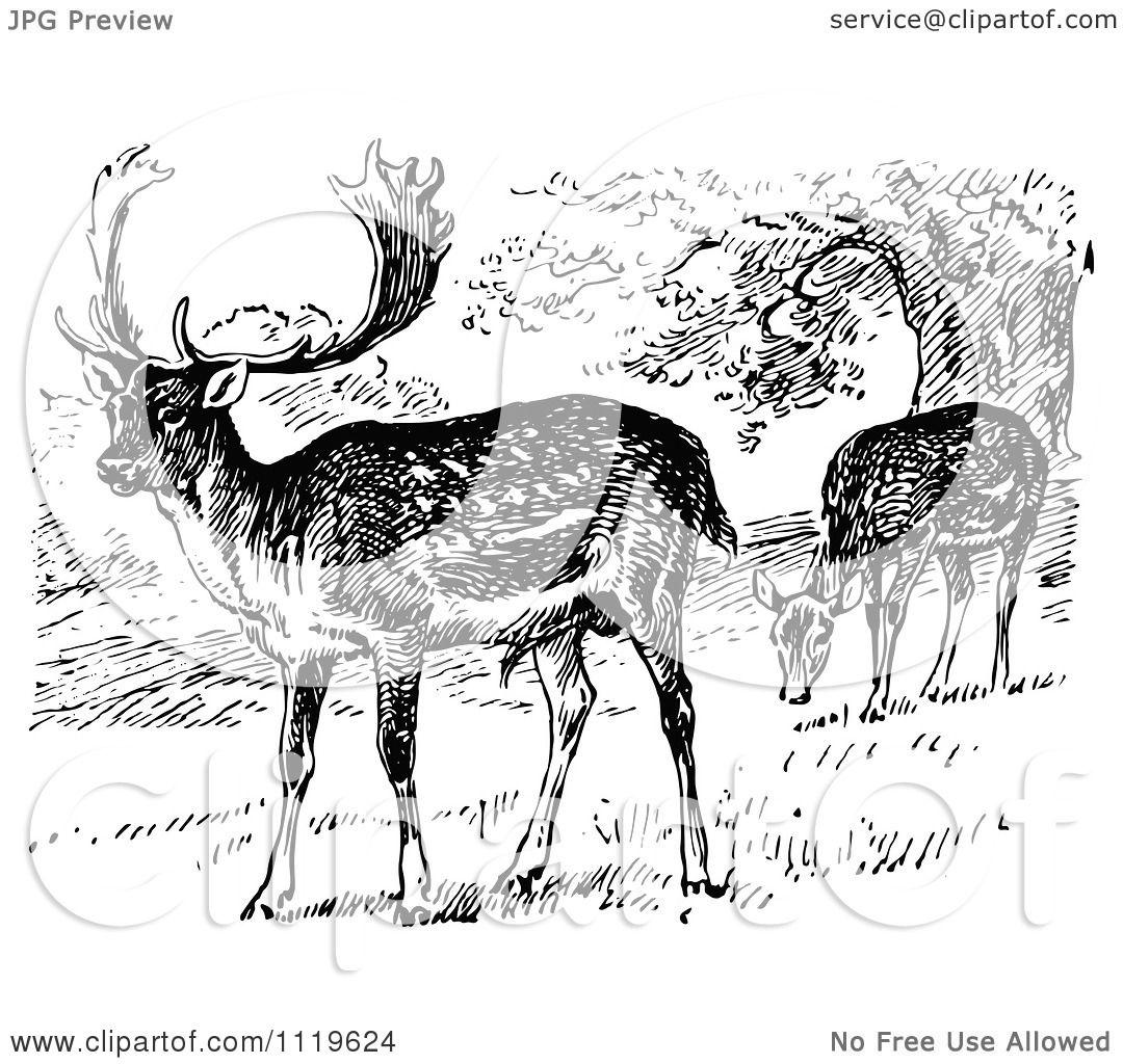 Deer illustration black and white - photo#45