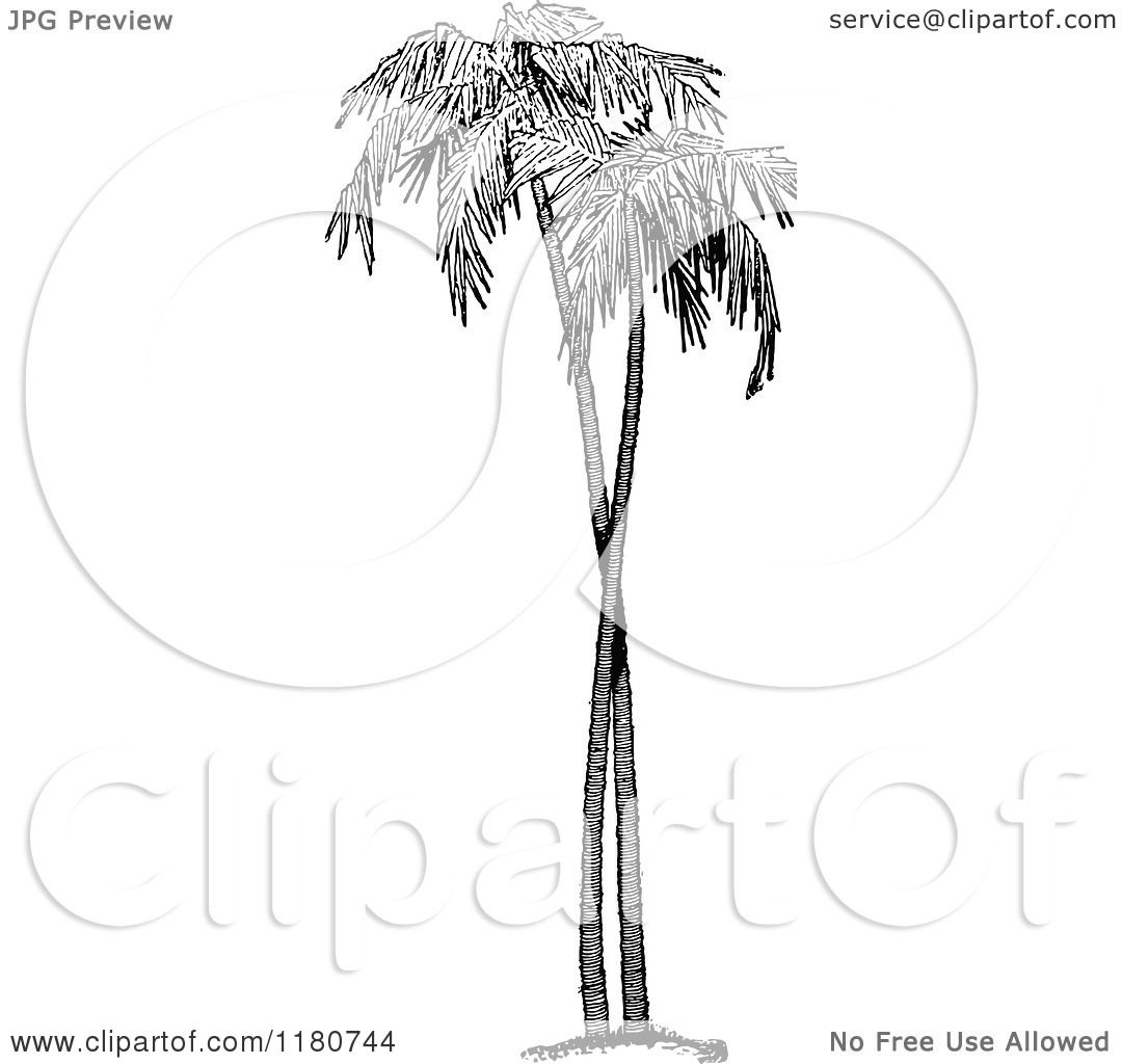 Palm Tree Tattoos Black And White Black And White Palm Trees