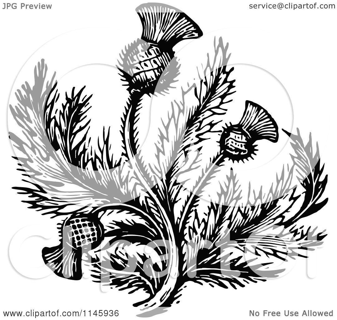 Clipart Of Retro Vintage Black And White Thistle Flower 2 Royalty