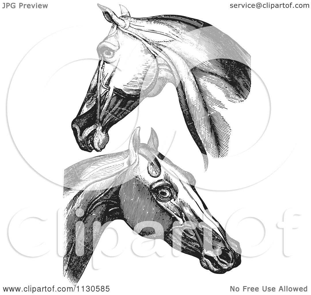 Unique Horse Neck Muscles Anatomy Picture Collection - Anatomy Ideas ...