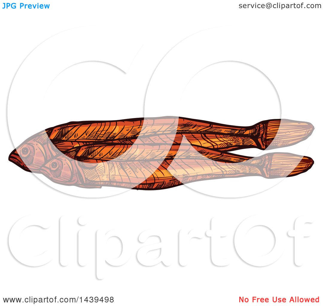 Clipart of Sketched Dried Fish, Anchovies - Royalty Free Vector ... for Dried Fish Clipart  155fiz