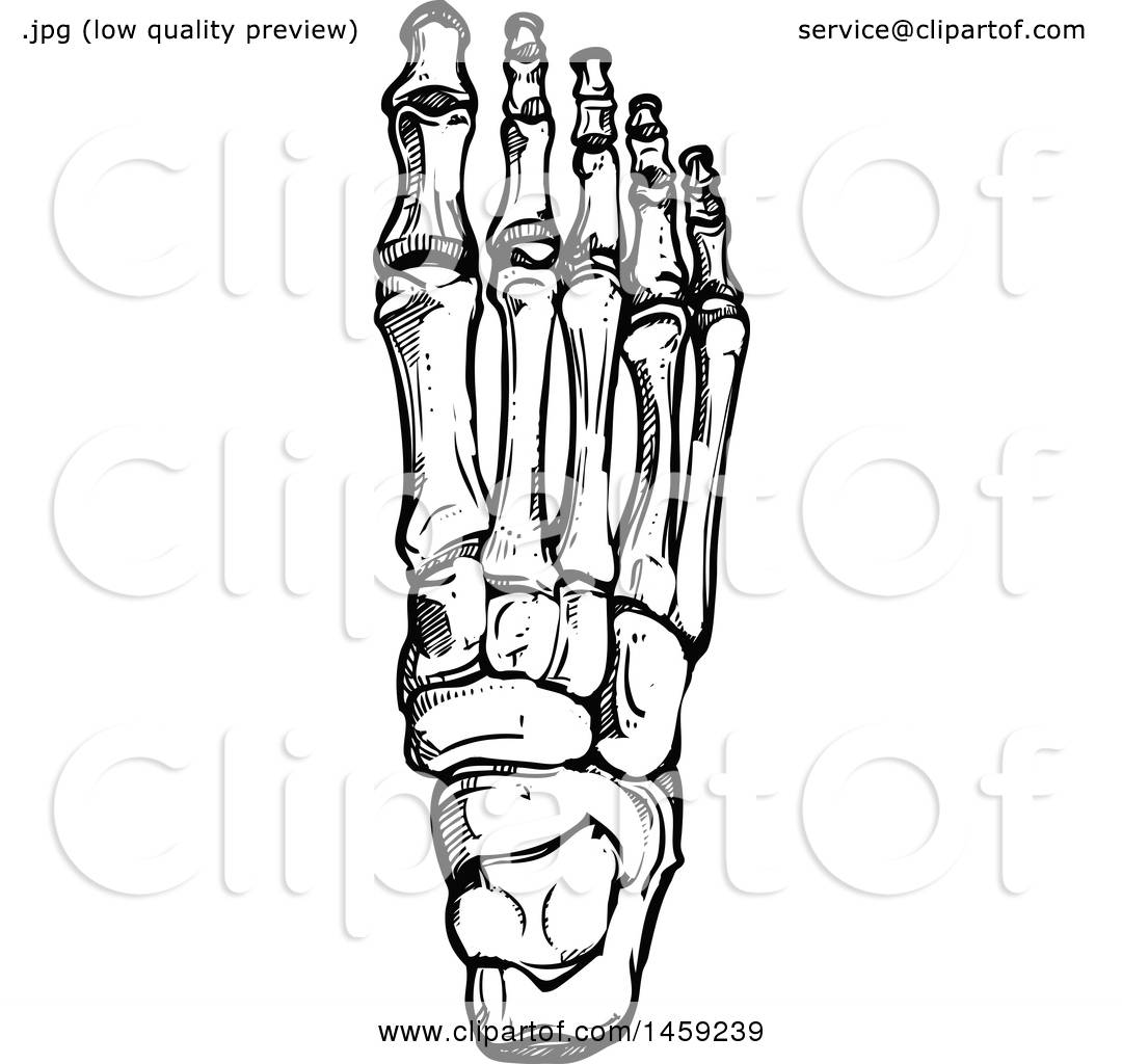 Clipart Of Sketched Human Foot Bones In Black And White