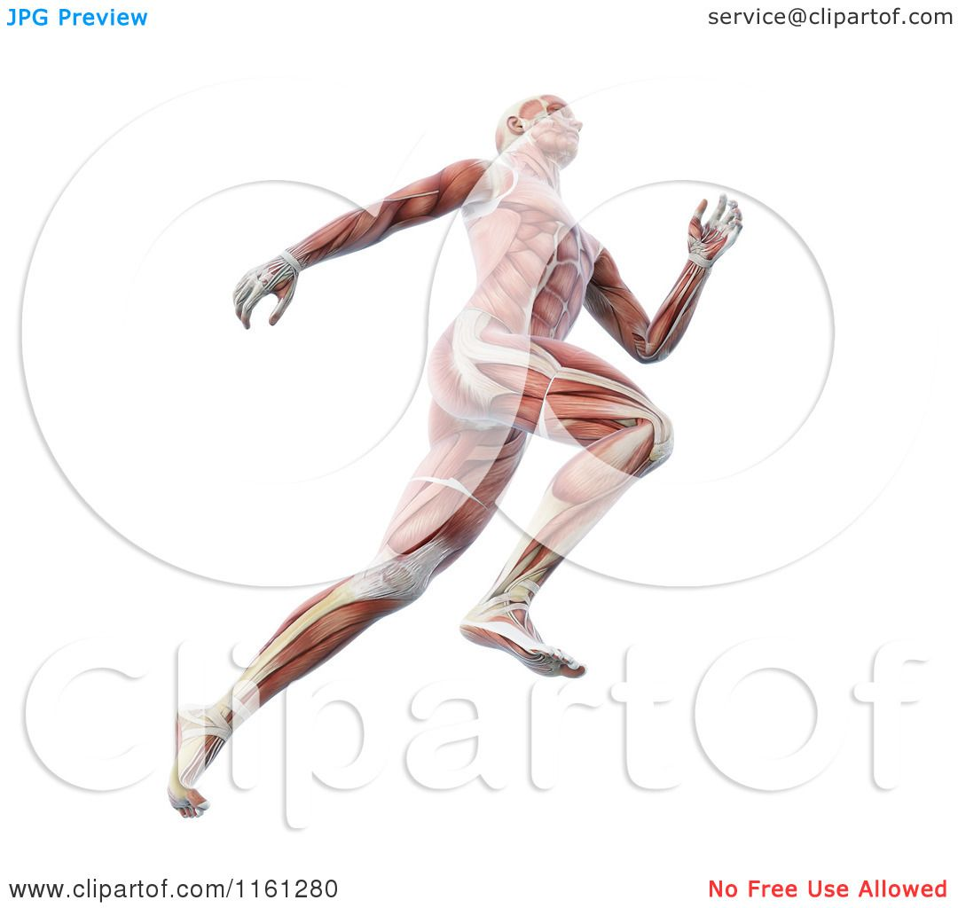 Clipart of the 3d Muscle Anatomy of a Runner - Royalty Free CGI ...