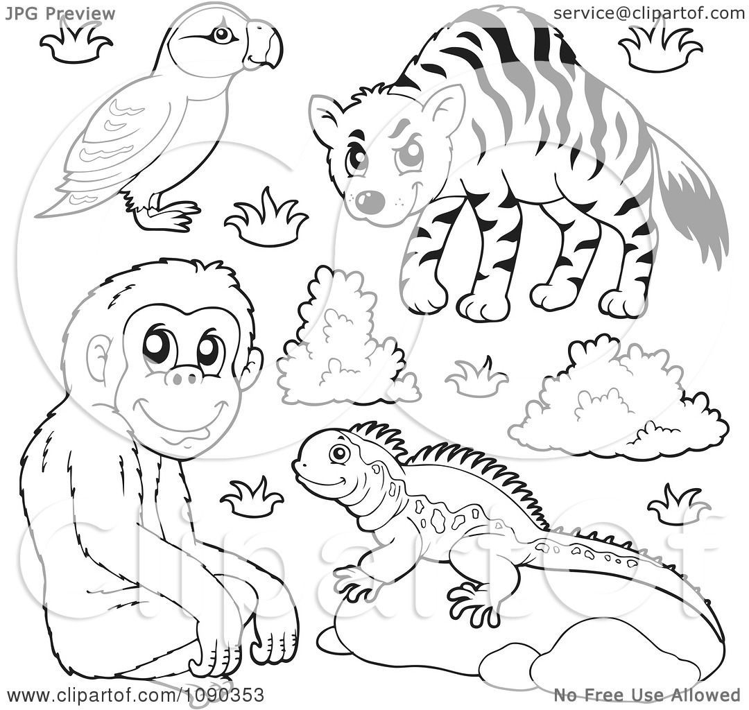 clipart outlined puffin monkey lizard and hyena zoo animals