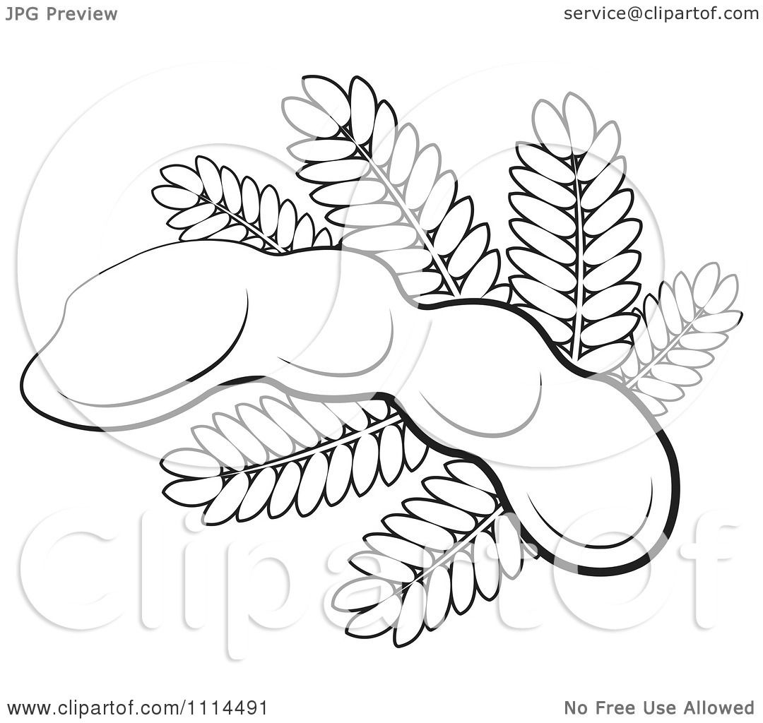 Clipart Outlined Tamarind Fruit And Leaves Royalty Free Vector Illustration By Lal Perera 1114491