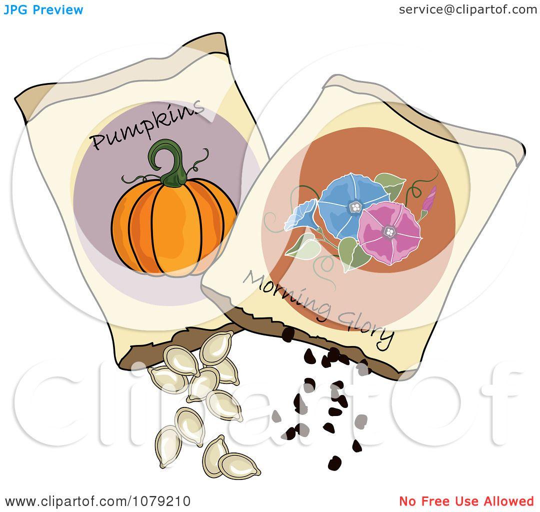 Pumpkin Seed Drawing Glory And Pumpkin Seeds