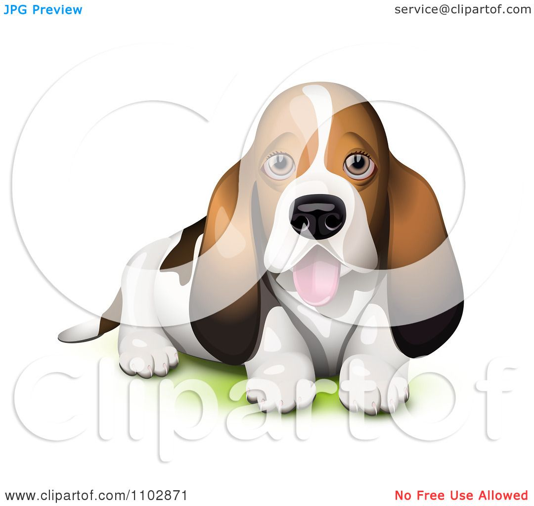 Clipart Panting Basset Hound Puppy Royalty Free Vector