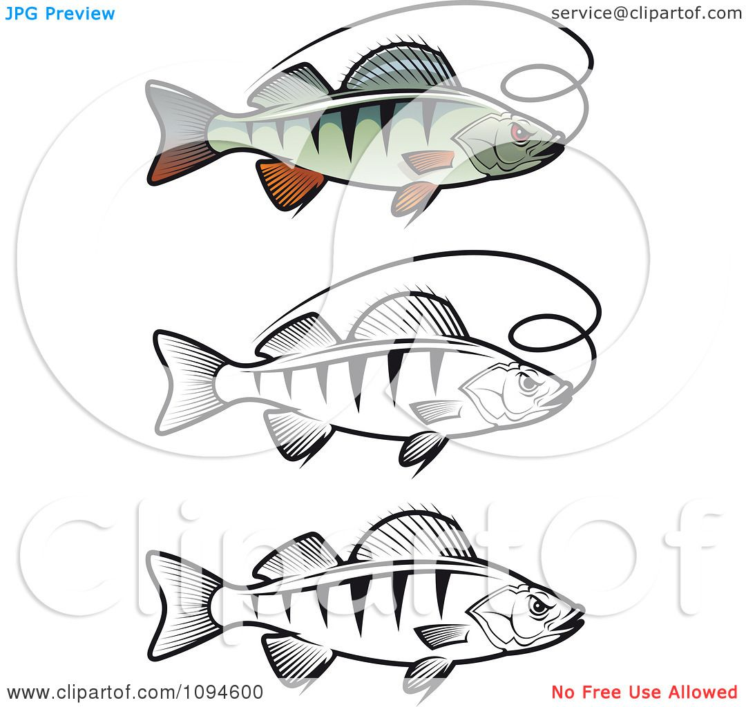 Clipart perch fish and fishing line royalty free vector for Free line fishing