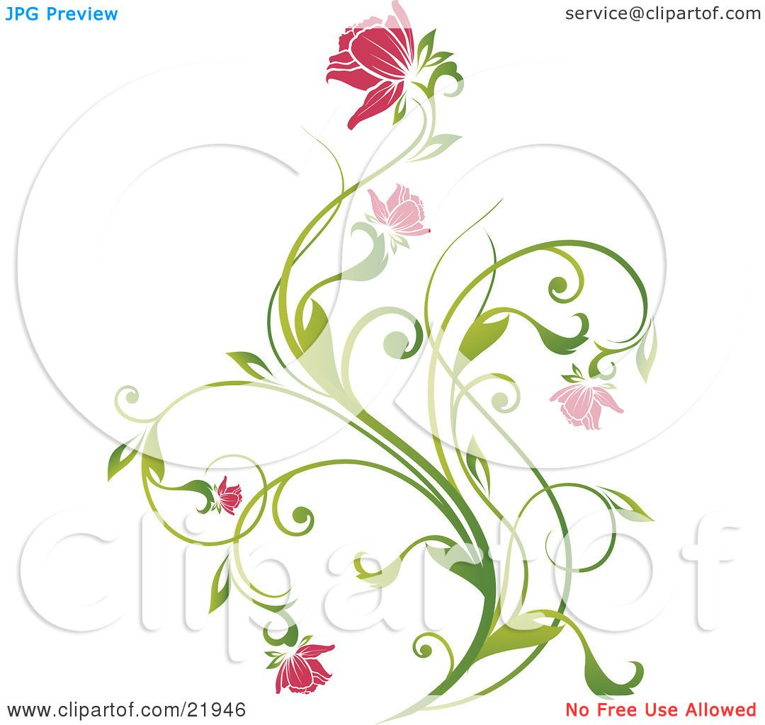 Clipart Picture Illustration Of A Delicate Green Plant With Pink Blooming Flowers On White Background By OnFocusMedia
